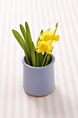 Yellow daffodils in a ceramic vase