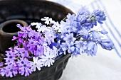 Bluebells (hyacinthoides hispanica blue) and aubrieta in a Bundt cake tin