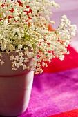 Sträusschen von Holunderblüten im Becher