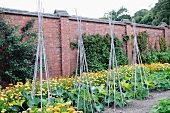 A vegetable garden in front of a brick wall