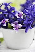 Hyacinths and violets in an enamel cup (close-up)