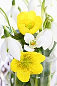 Snowdrops and winter aconite in a vase