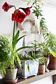Assorted potted house plants on a shelf
