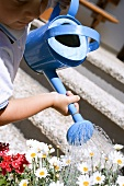 Child watering flowers with blue watering can