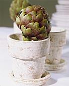 Artichoke in flowerpot
