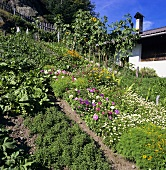 Garden with vegetables and flowers