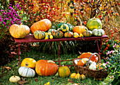 Pumpkins and ornamental gourds on bench, in basket & in grass