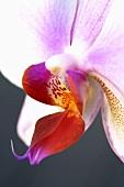 Eine Orchideenblüte