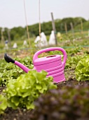 Watering can in a lettuce bed