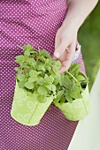 Woman carrying fresh garden herbs