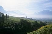Weinbau bei Yovrne, Aigle, Waadt, Schweiz