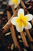 Exotic spices and a frangipani flower