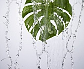 A green leaf under running water