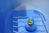 Blue rubber ducky in a blue bath tub