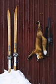 Wooden skies, gun and dead fox in front of a wooden hut