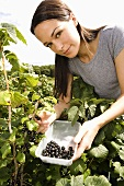 A woman picking blackcurrants