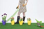 Frau giesst mit einem Schlauch Tulpen auf auf Kunstrasen