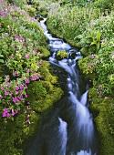 Monkey flowers beside a river