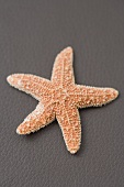 A starfish on brown (coloured background)