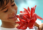 Boy smelling torch ginger