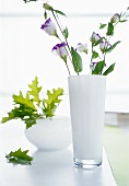 Lisianthus in tall, white, glass vase