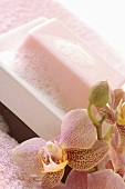Soap with lather in a soap dish, orchid