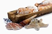 Maritime decoration (starfish and seashells)