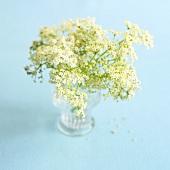 Elderflowers in a glass vase
