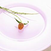 Blüte auf pinkem Teller