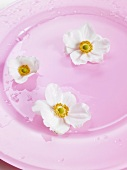 Japanische Anemonen auf rosa Teller