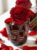 Rote Rose im rotem Glas