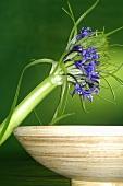 Exotische Blume neben einer Schale