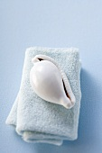 Sea shell on towel