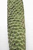 Artificial green fir cone (Christmas tree ornament)