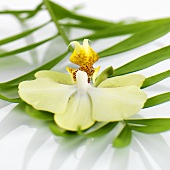 Orchid on fan palm leaf