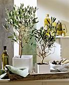 Olive trees (Mediterranean interior decoration)