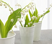 Lilies of the valley in white plastic cups