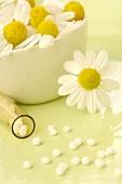 Chamomile flowers and globuli (small pellets)