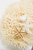 Natural sponge, starfish and snail shell on towel