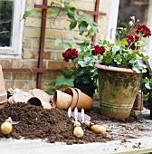 Geranium, flowerpots, compost and garden tools
