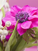 Pink anemone in vase of spring flowers