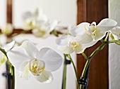 weiße Orchideen als Blumendeko