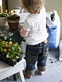 Little girl planting pansies in flowerpot