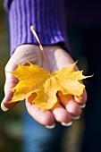 Frauenhand hält ein gelbes Ahornblatt