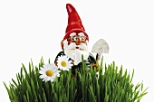 Garden gnome in grass