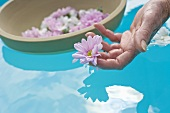 Flowers floating on surface of water, woman's hand picking up flower