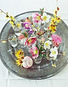 Various sprigs of winter flowers in glass vases on a pewter plate