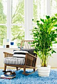 Fishtail palm next to wooden rocking chair in front of lattice window