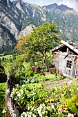 A vegetable garden in Pretzhof, South Tyrol