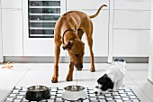 Dogs eating in kitchen